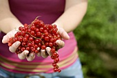 Hands full of redcurrants