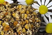Dried and fresh chamomile flowers