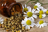 Fresh and dried chamomile flowers with upset bottle