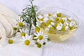 Chamomile: wash and fomentation