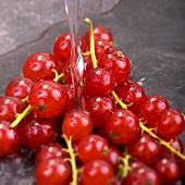 Rote Johannisbeeren mit Wasserstrahl (Close Up)