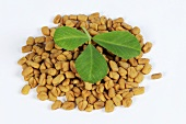 Fenugreek seeds and leaf