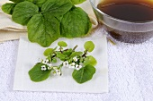 Watercress, tincture for poultices and compresses