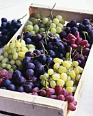 Assorted grapes in a crate