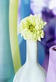 White chrysanthemum and coloured vases