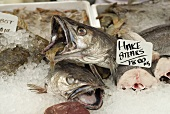 Fish (hake etc.) on a market stall