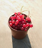 Redcurrants in a flowerpot