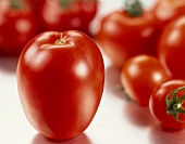 Tomaten, im Vordergrund eine Eiertomate