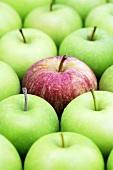 Roter Apfel (Sorte Royal Gala) zwischen Granny-Smith-Äpfeln