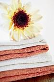 Chrysanthemum on table linen