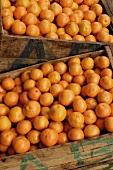 Fresh oranges in crates