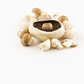 Portobello mushroom and chestnut mushrooms