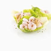 Shrimps on lettuce leaves