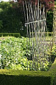 A cane support for growing climbing beans in a vegetable bed