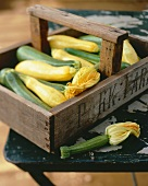 Yellow & green courgettes & courgette flowers in wooden basket