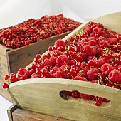 Raspberries and redcurrants in wooden boxes