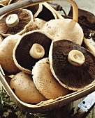 Basket of portabella mushrooms
