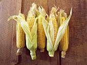 Five cobs of corn