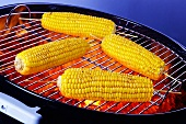 Four cobs of corn on barbecue