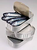 Sardines poking out of opened tin on pile of tins