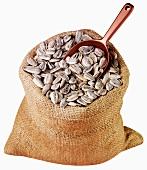 Sunflower seeds in jute sack with scoop