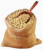 Soya beans in jute sack with scoop