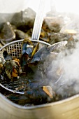 Cooking mussels in a pan