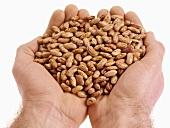 Hands holding speckled kidney beans