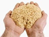 Hands holding soya bran