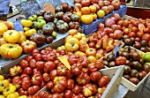 Various types of tomatoes on a market stall