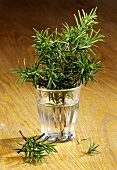 Sprigs of rosemary in a glass