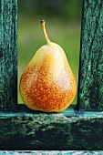 A pear on a green wooden bench out of doors