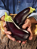 Man holding two aubergines over a tree trunk