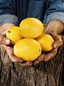Man holding four lemons in both hands