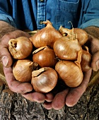 Man holding onions in both hands over a tree trunk