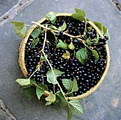 Blackcurrants with twigs in woven basket