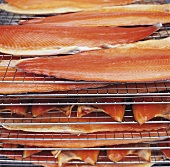 Sides of salmon on racks in a smoking oven