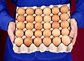 Hands holding egg tray full of brown eggs