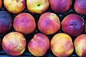 Nectarines in a crate on a market stall in Lazio, Italy