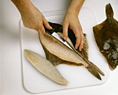 Filleting a flat fish