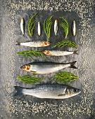 Various fish and glasswort