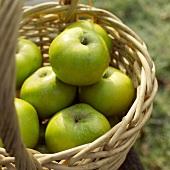 Several apples in a basket