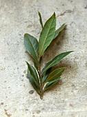 Sprig of fresh bay leaves