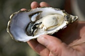 Man holding an opened oyster in his hand