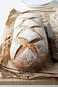Crusty bread (rye bread) on paper