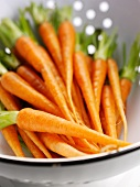Young carrots in a colander