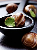 Snails stuffed with garlic and parsley cream