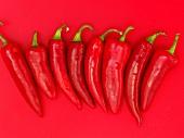 Rote Chilischoten auf rotem Untergrund