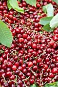 Cherries, full-frame