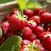 Fresh strawberries in crate (close-up)